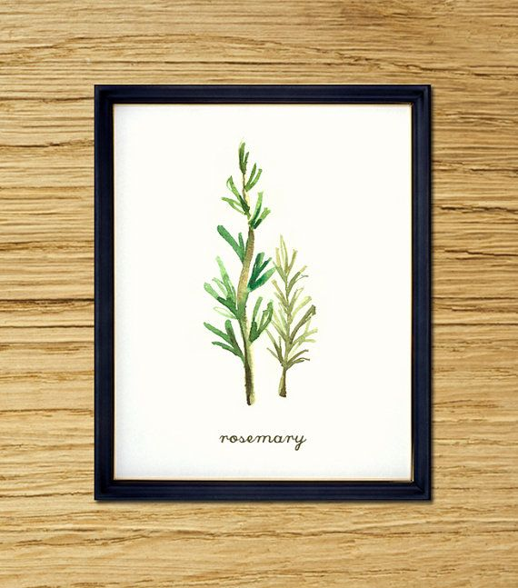 Kitchen Herbarium Art: Rosemary Herb Botanical Print, Herb Watercolor Painting