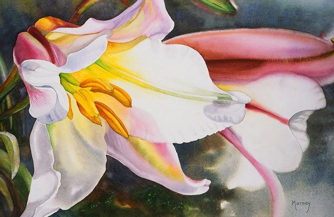 Marney Ward Flower Paintings-AmO Images-AmO Images