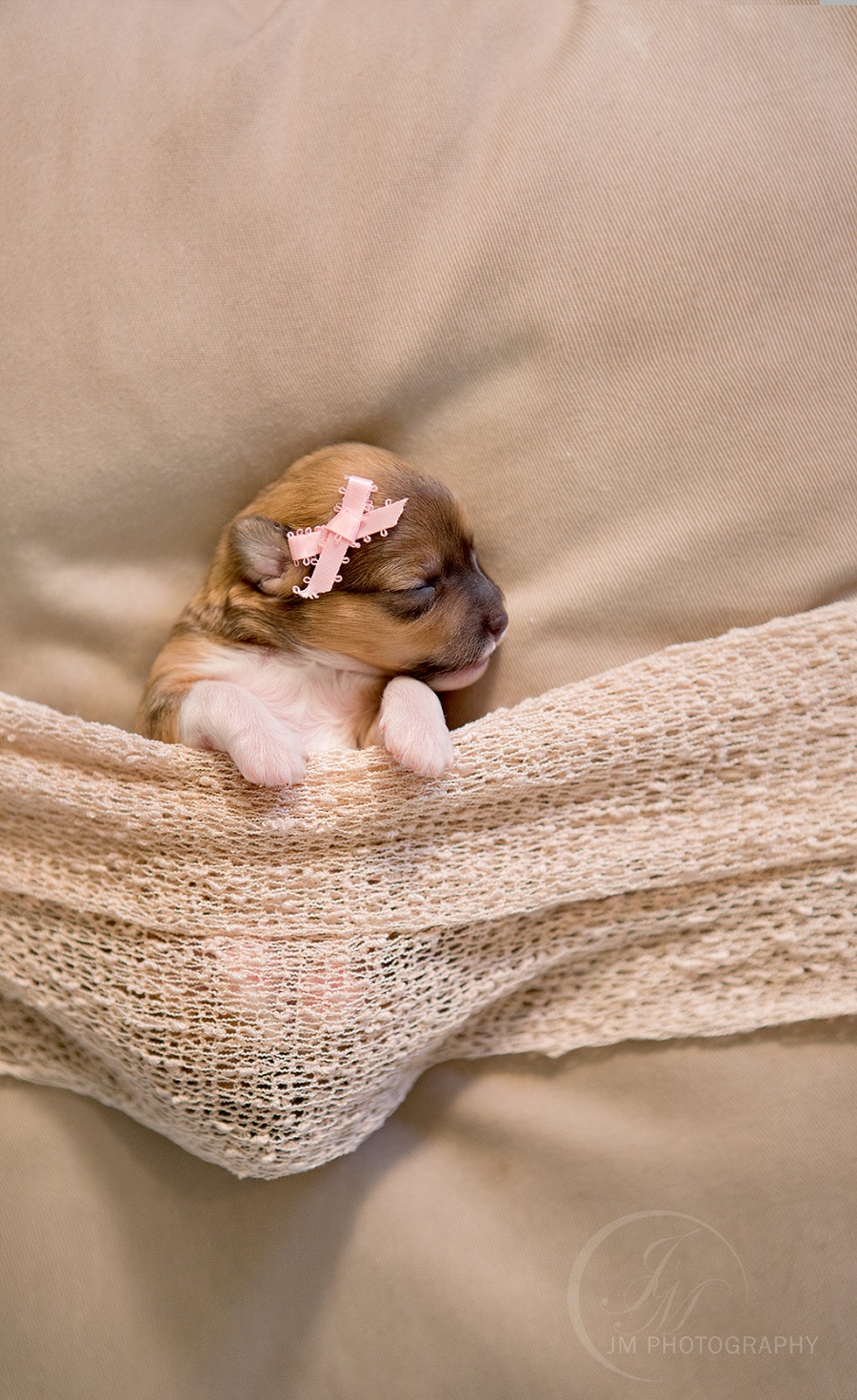 So Adorable This Newborn Puppy Photoshoot Will Melt Your Heart Newborn Puppies Puppy Pictures Puppy Photography