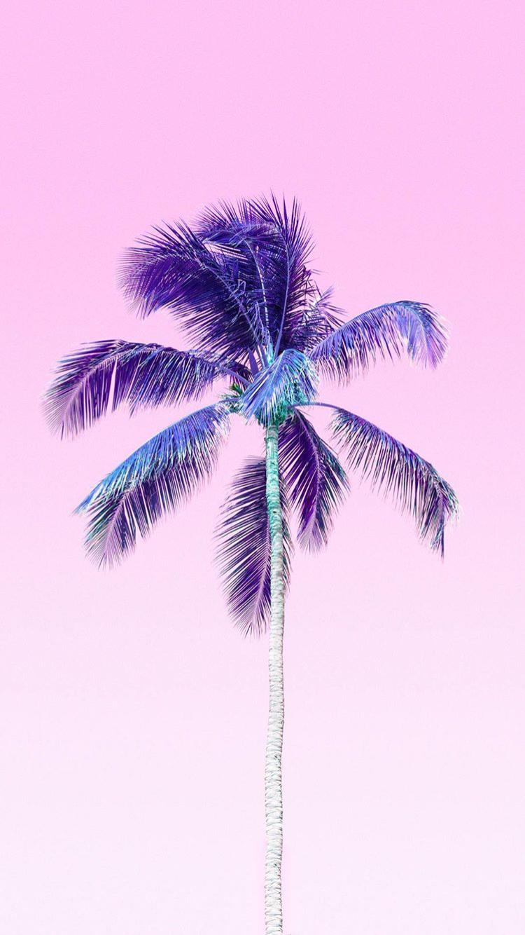 Marble Wallpaper Iphone 7 Plus Matt Crump Photography Pastel Iphone Wallpaper Palm Tree