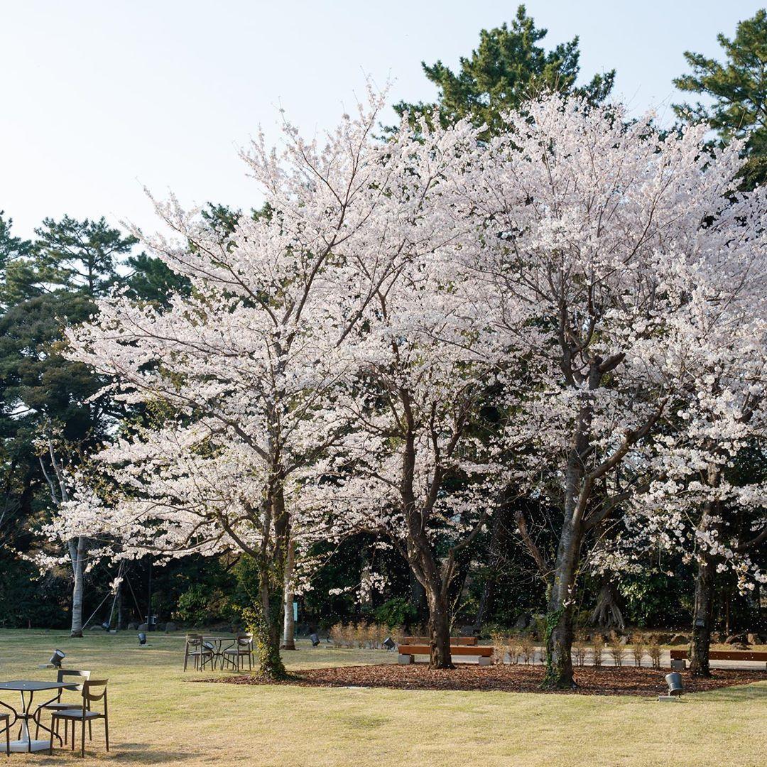 いいね 1 618件 コメント10件 東京都庭園美術館 Teien Art Museum Teienartmuseum のinstagramアカウント 臨時休館中 4 12予定 ただ今 正門横および西洋庭園の桜が満開となっております 花びらが舞い散る姿が美しいのも桜の魅力で 庭園 花びら