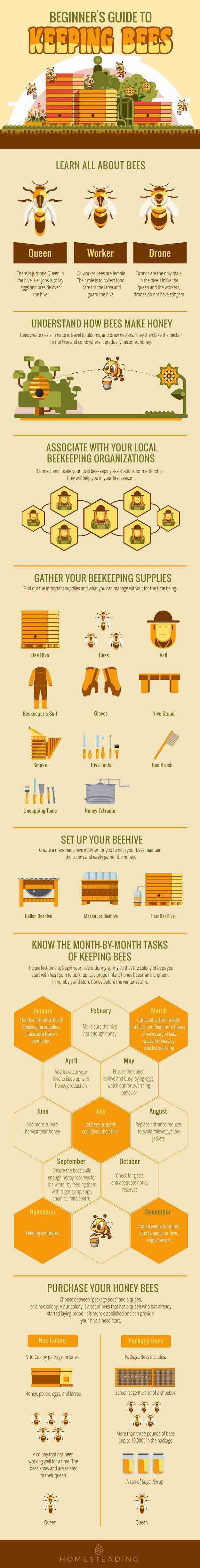 Beginner's Guide To Keeping Bees Beginners Guide To Keeping Bees