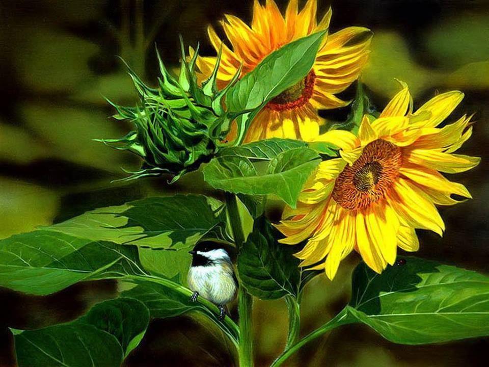 Sunflowers with birdie