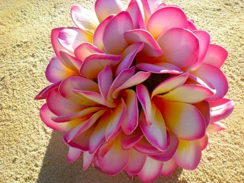 Pink and Yellow Plumeria...