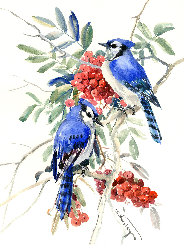 Blue Jays And Rowan Tree Original Watercolor Painting Birds