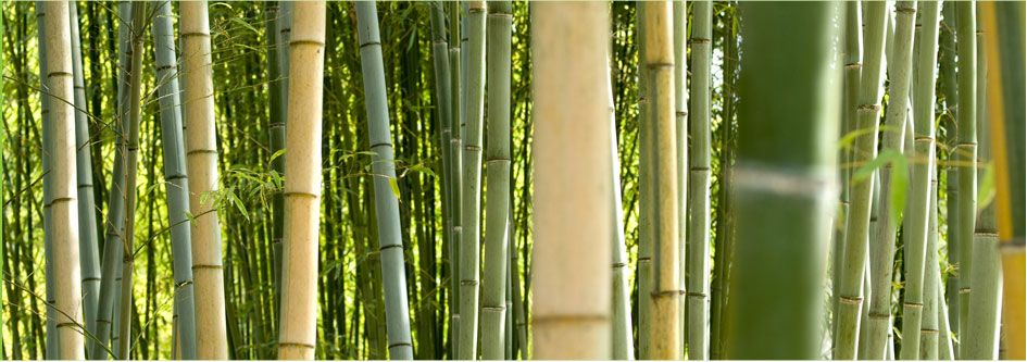 ornamental bamboo fence.htm we help stressed out people get balanced and energized with  we help stressed out people get