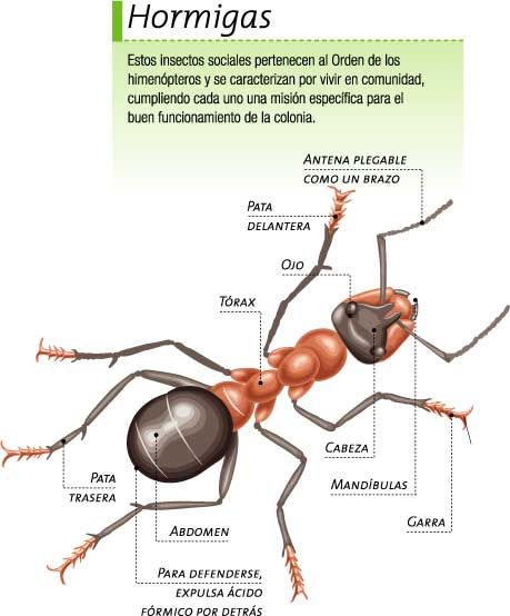 fichas insectos para nios buscar con google