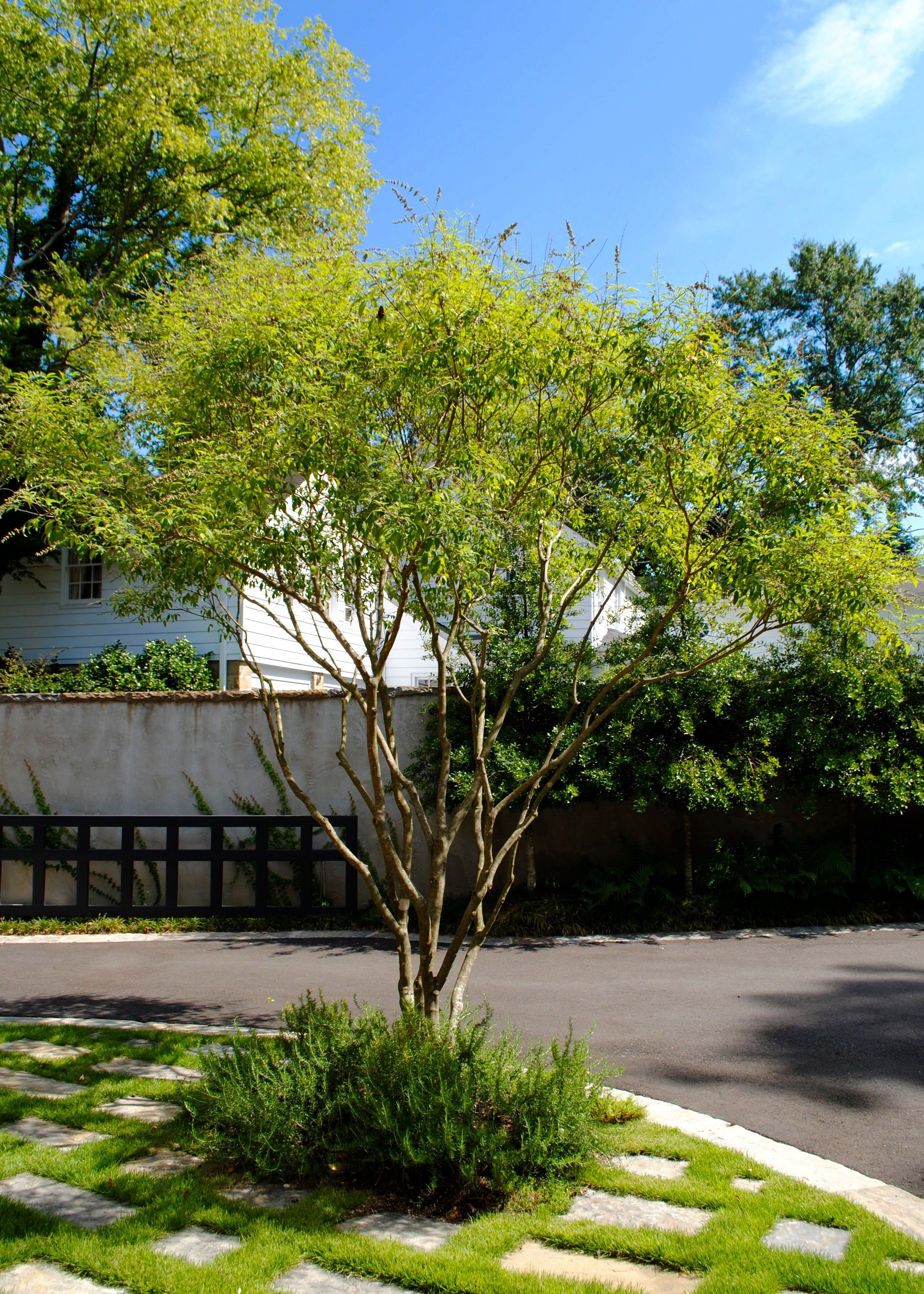 Looking For A Cool Ornamental Tree To Add To Your