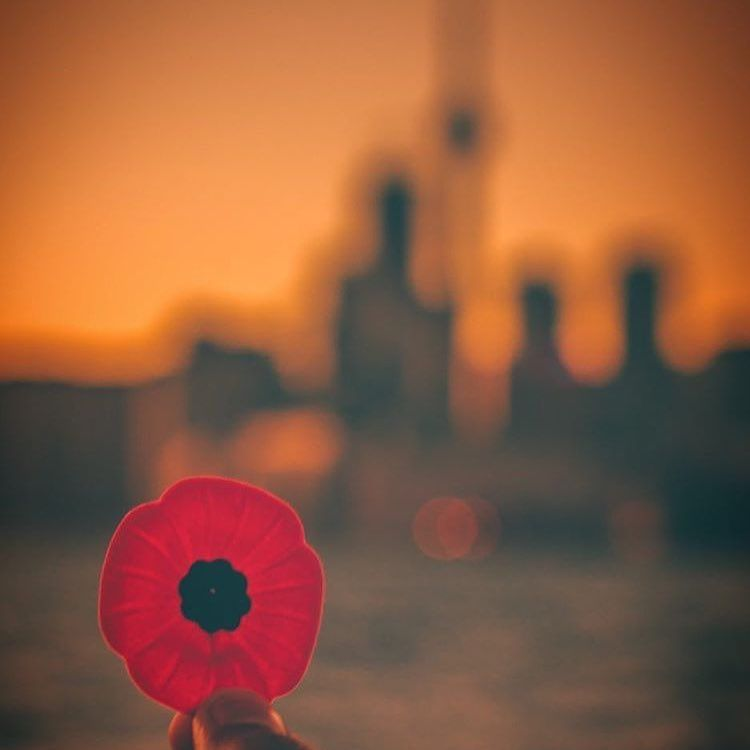 Remembrance day veterans day is important lest we forget remembrance day veterans day is important lest we forget publicscrutiny Gallery
