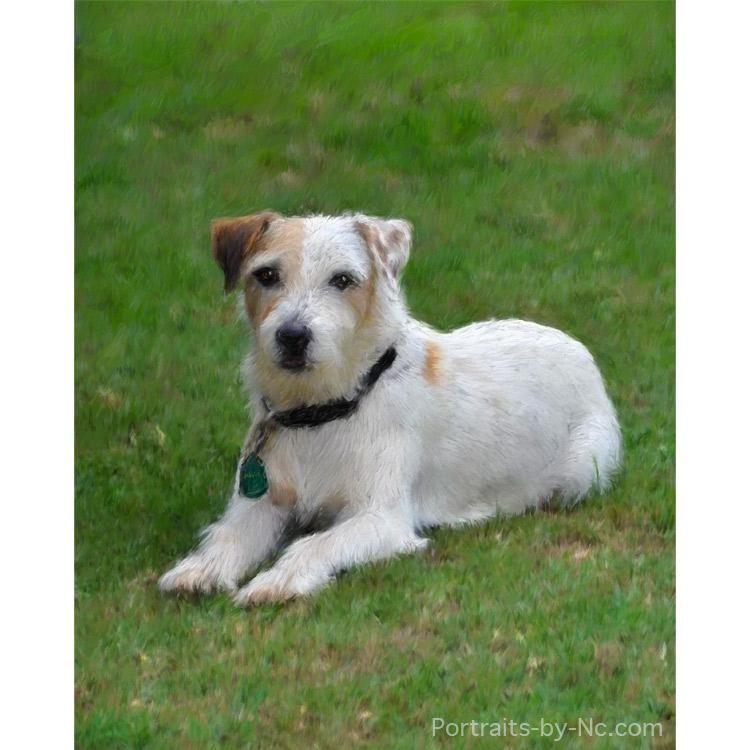 Russell Terrier Portrait Pets Cheap Pet Insurance Terrier Dogs