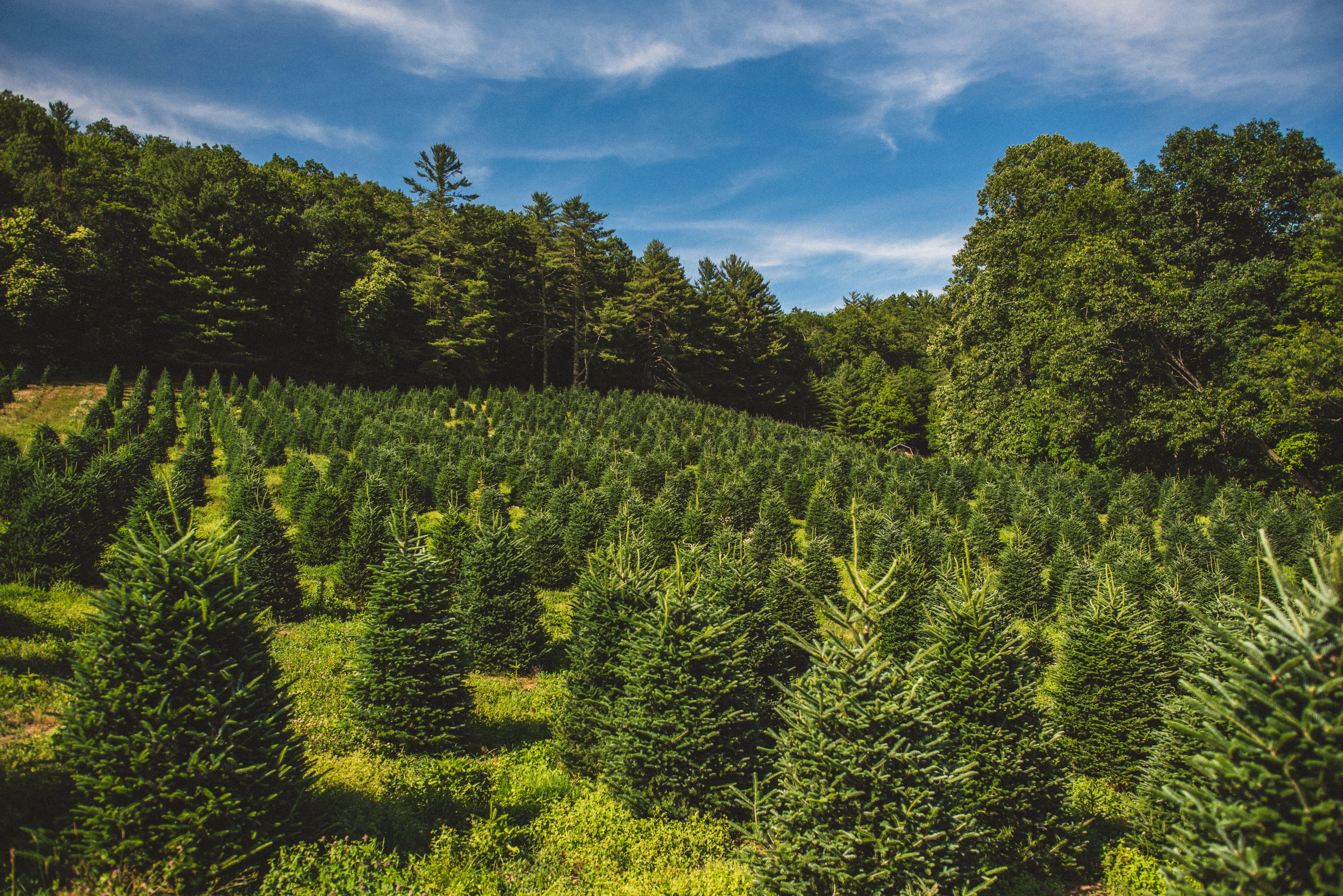 Pin by Sawyer Family Farmstead on Married Among the Christmas Trees   Nc mountain wedding ...