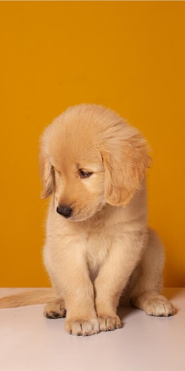Pin on Puppy Sleeping