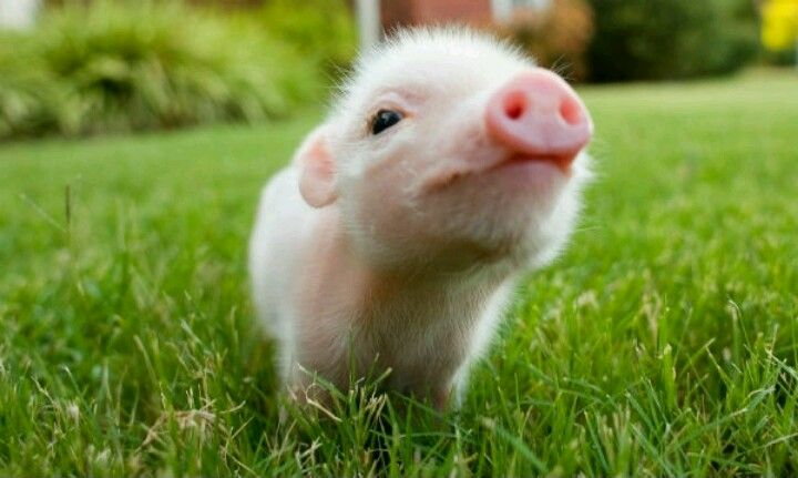 This lil piggy ♡