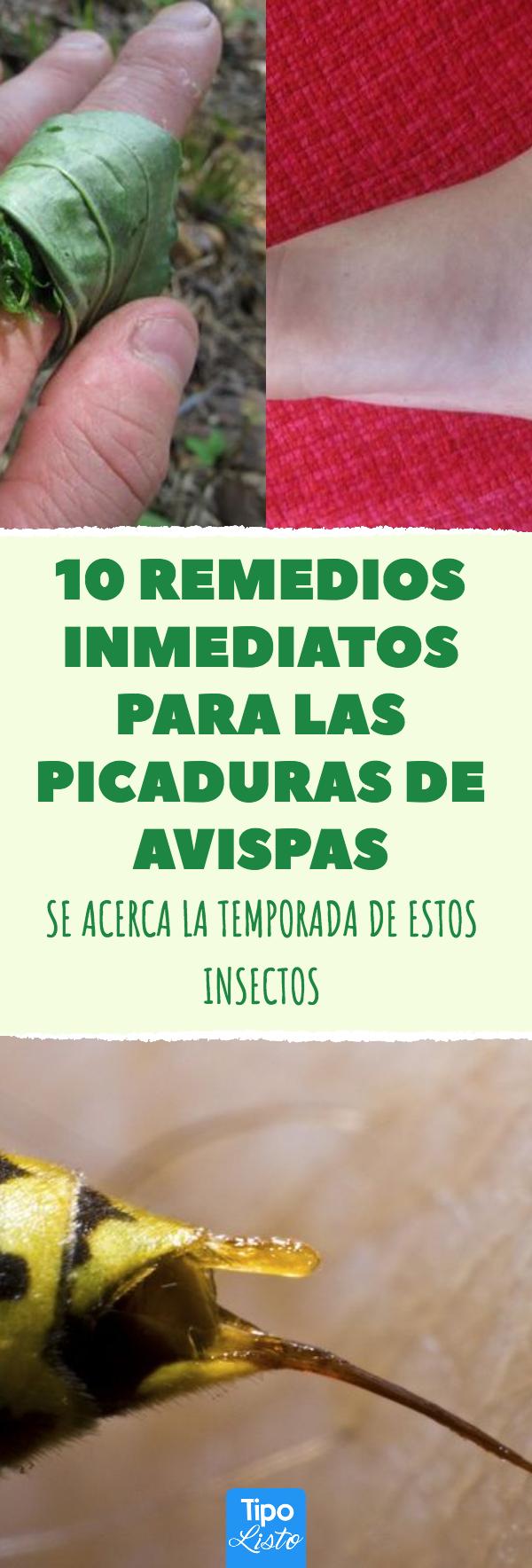 Cómo Aliviar El Dolor De Las Picaduras De Avispas Remedios Simples Y Baratos Para Combatir Los Síntomas De Las Picaduras Picaduras Picadura Abeja Remedios