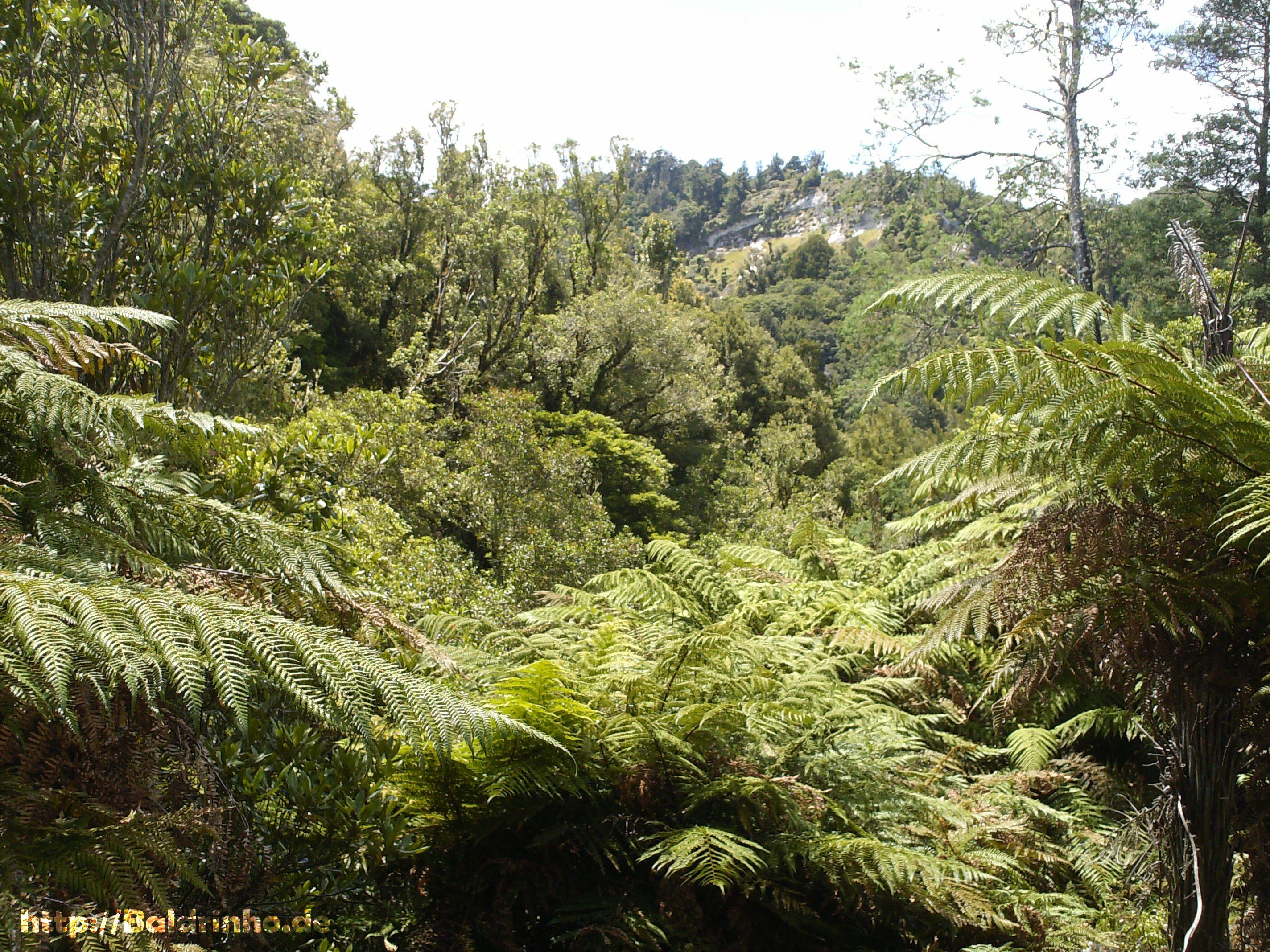 Mitten im #Dschungel voll #Farnen und Grün