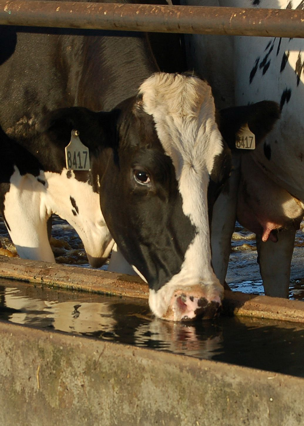 Profit tips Top 9 reasons water quality matters for dairy