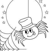 Dibujo De Una Araña Y Su Telaraña Para Coloraer Halloween