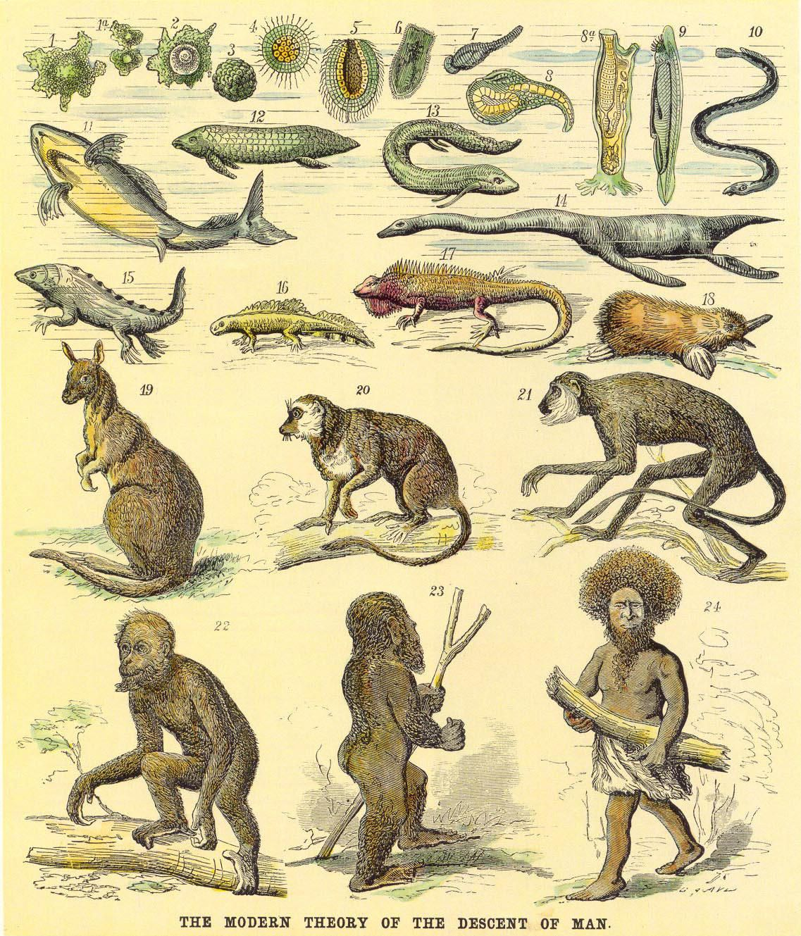 The Evolution Of Man Evolution And St Century - 17 satirical illustrations that show humans havent really evolved
