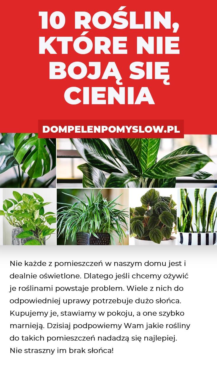 10 Roslin Ktore Nie Boja Sie Cienia House Plants Plants Flowers