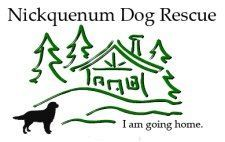 Pin By Roger Biduk On Ontario Canada Animal Shelters Rescues Canadian Animals Rescue Dogs Animal Rescue Shelters