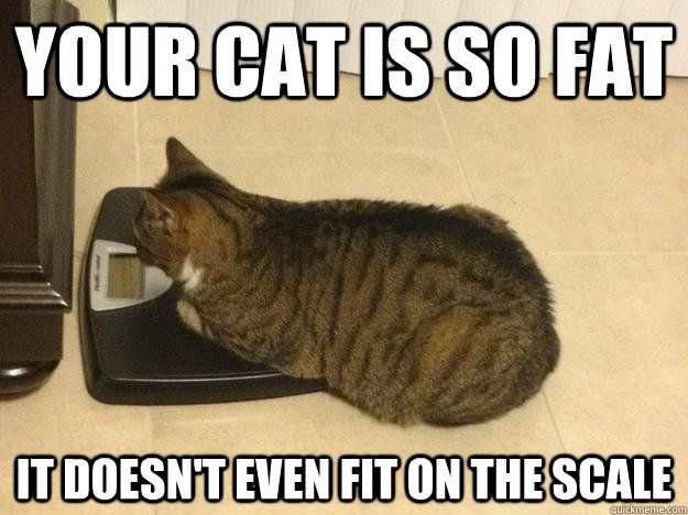 Funny Cat Meme Generator : Fat cat meme your cat is so fat it doesn't even fit on the scale