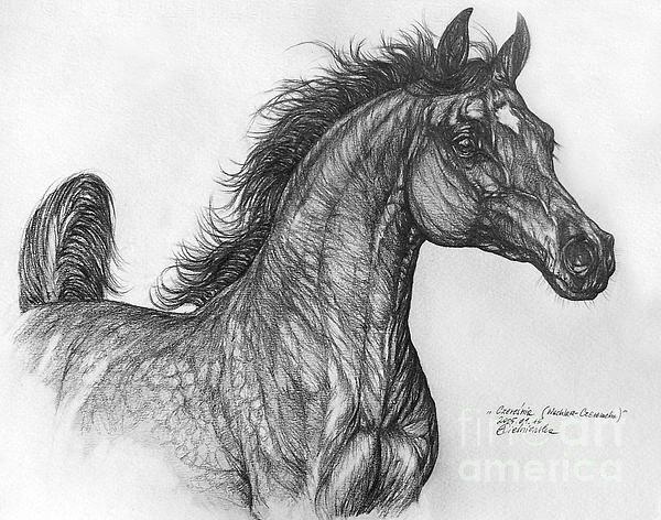 Arabian Horse Drawing - Angel Tarantella