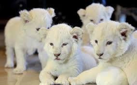 zoologico de buenos aires animales - Buscar con Google
