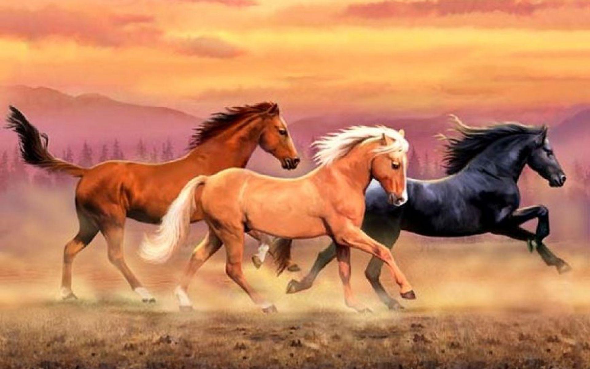 Popular Wallpaper Horse Family - c39e28c37f5823aeb35d018df00e020a  Pictures_12956.jpg