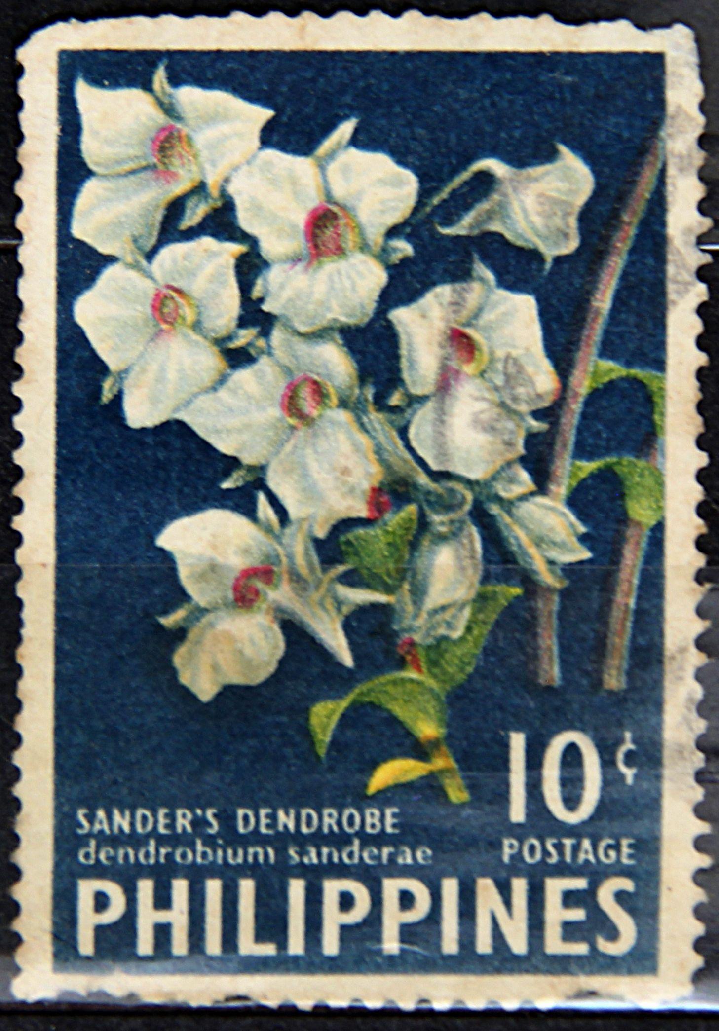 Philippines, DENDROBIUM SANDERAE (Mrs. Sander's Dendrobium