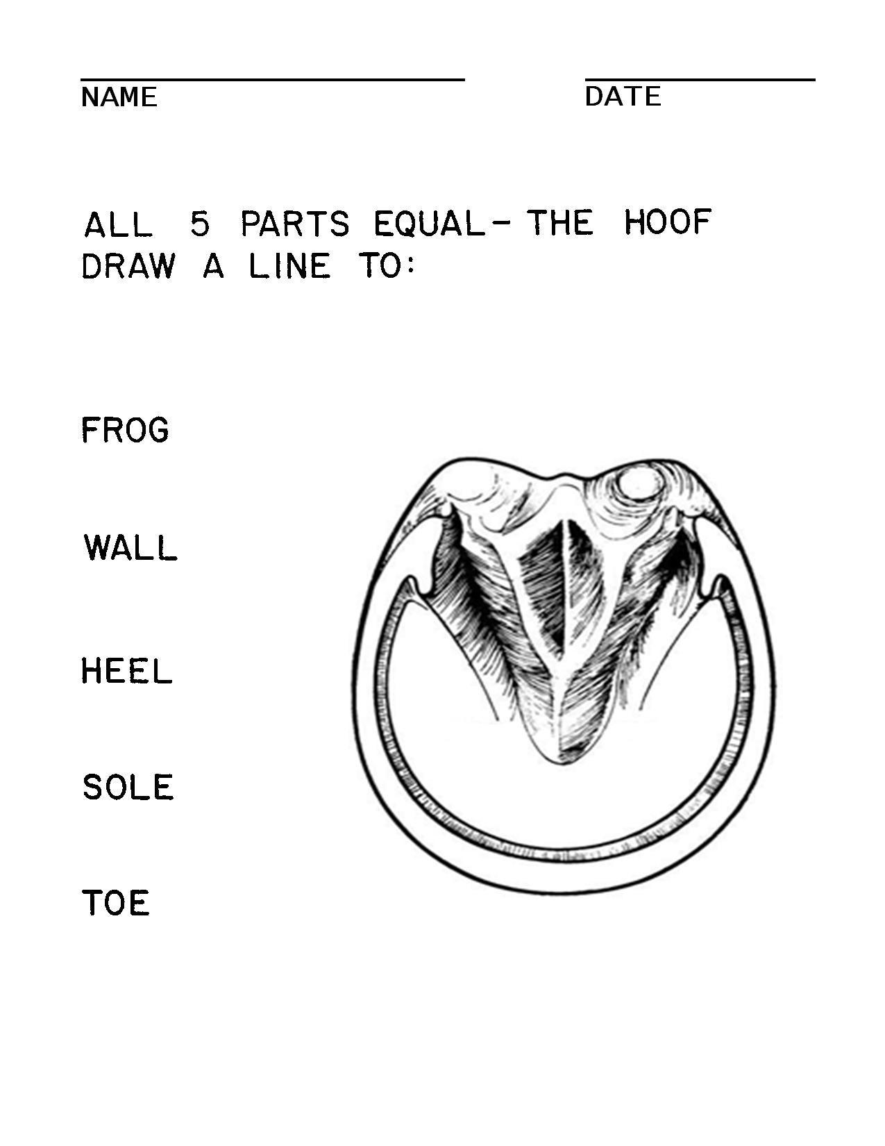 Equine Hoof Diagram No Labels - DIY Wiring Diagrams •