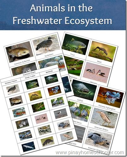 Free Animals in the Freshwater Ecosystem from The Pinay Homeschooler