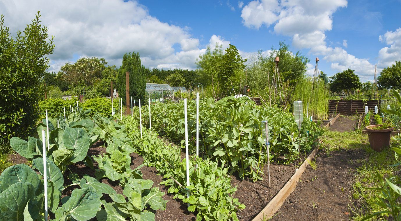 Vegetables For Zone 7 - Learn About Vegetable Gardening In ...