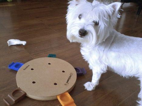 Nana, West Higland White Terrier
