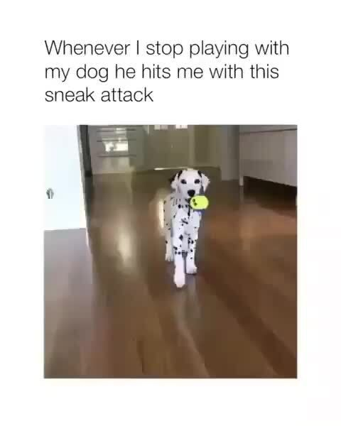 Whenever I stop playing with my dog he hits me with this sneak attack – popular memes on the site ifunny.co