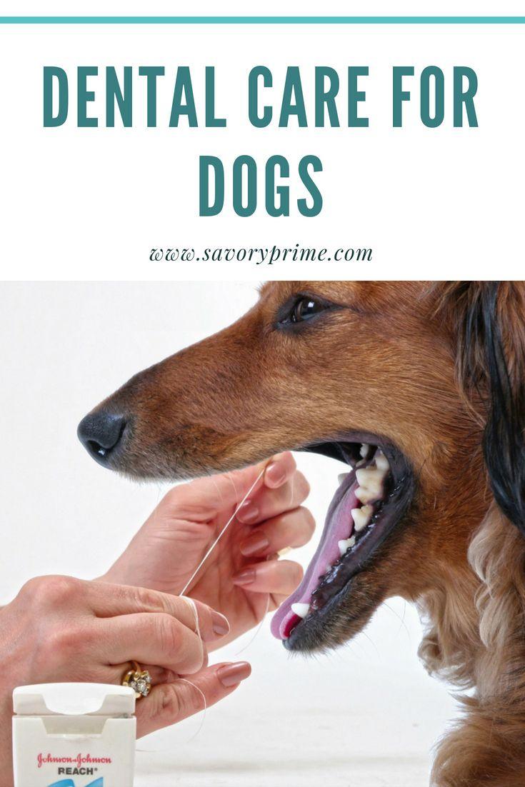 Dental care for dogs savory prime pet treats dog