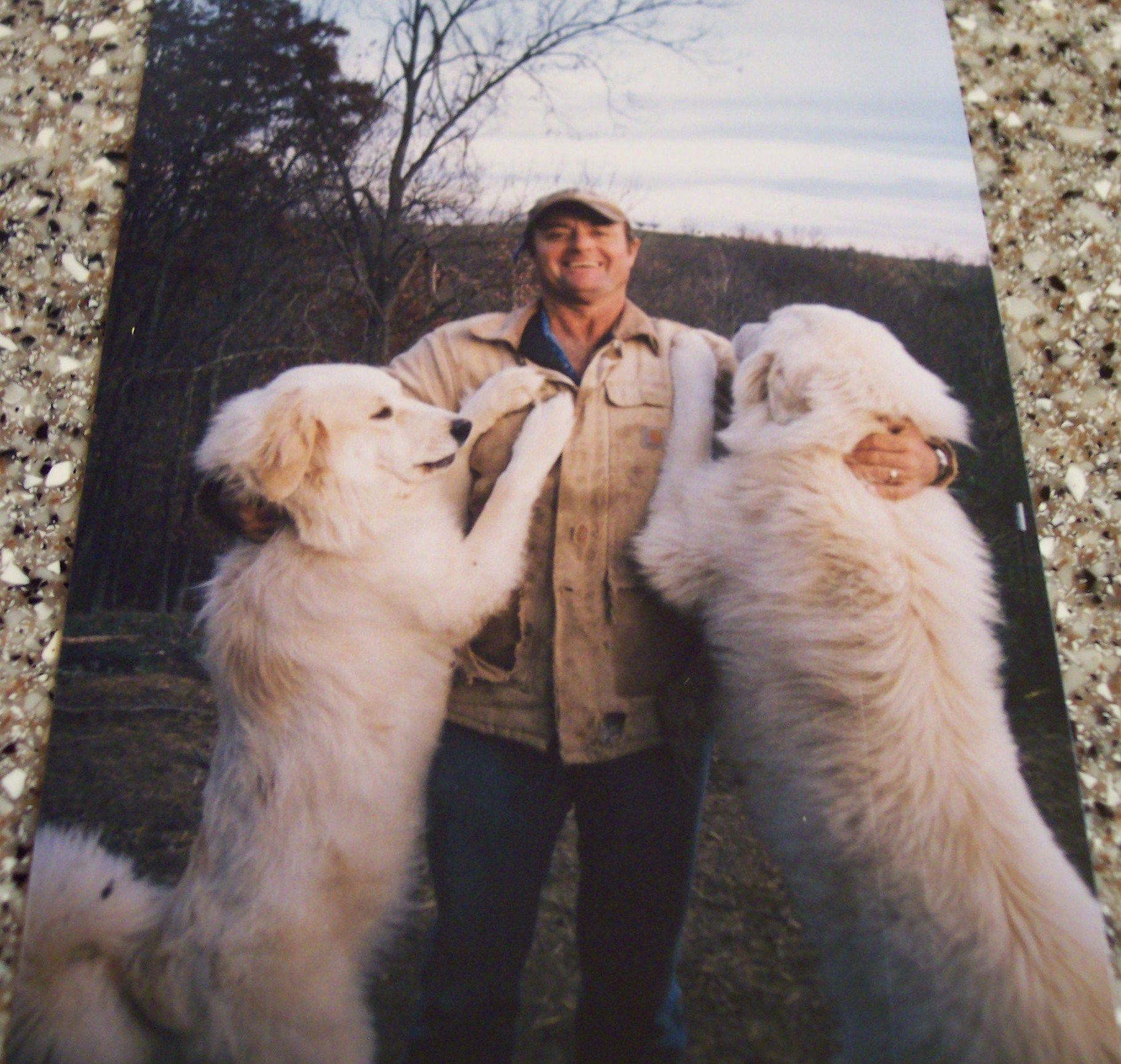 Looks Like Luke And Duke Great Pyrenees Dog Livestock