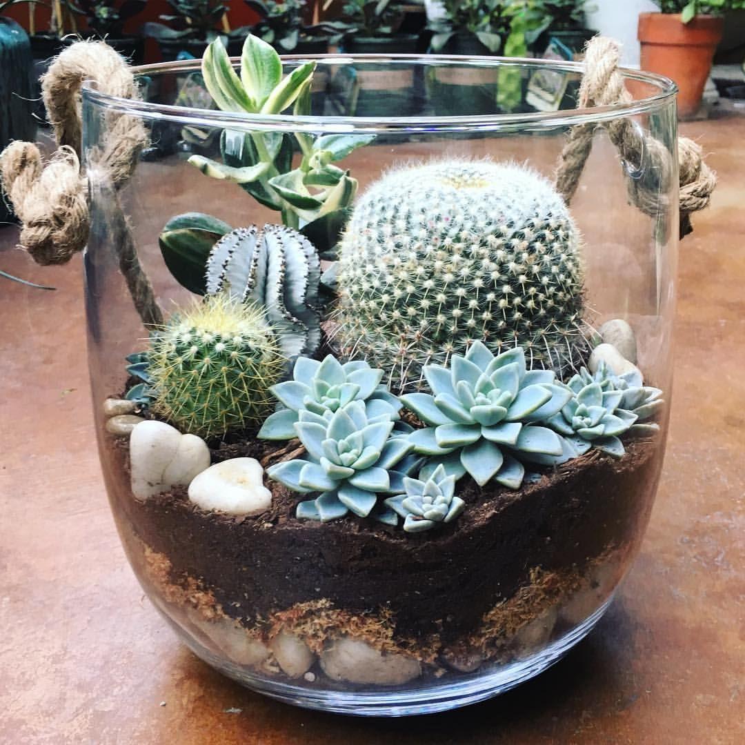 Suculentas plantas pinterest suculentas cactus y for Cactus decoracion