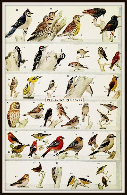 Genial Woodpecker Identification Chart | Permanent And Winter Visitor Birds In  Northern United States And .