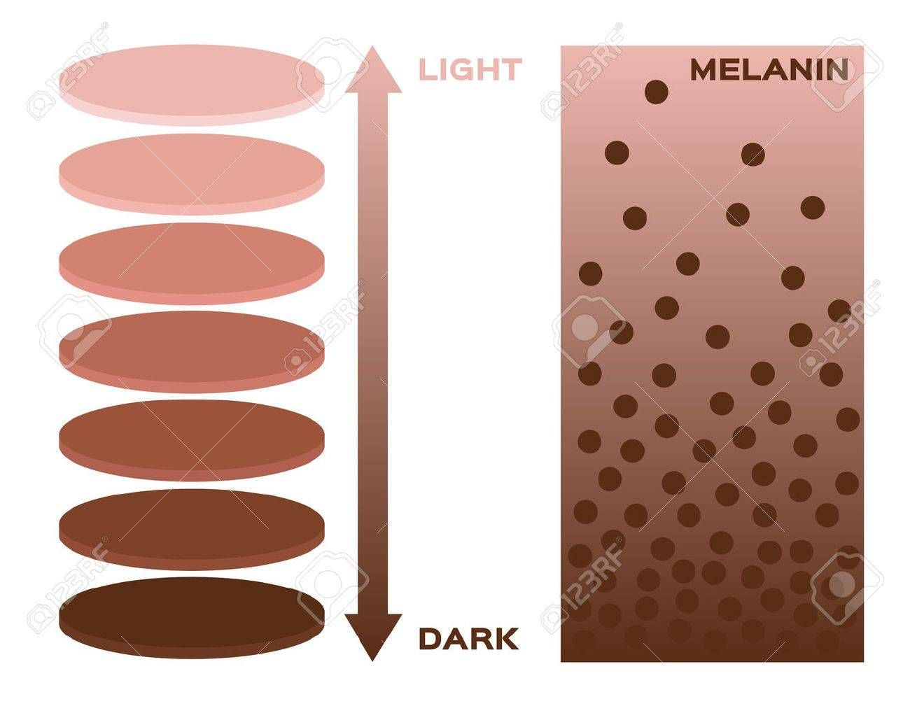 Skin Color And Melanin Index Infographic Vector 3 Chart Dark