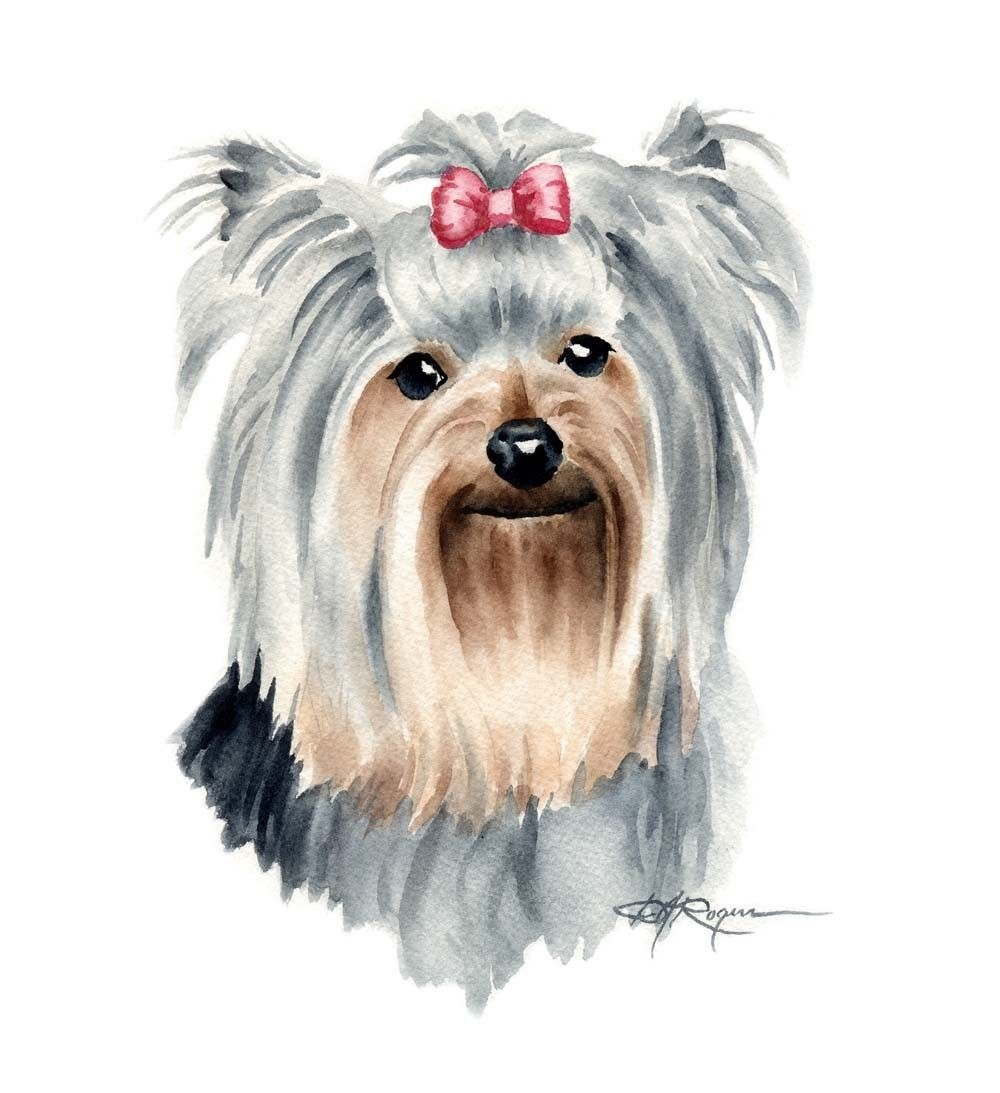 YORKSHIRE TERRIER Dog Watercolor Painting Art Print Signed by Artist ...