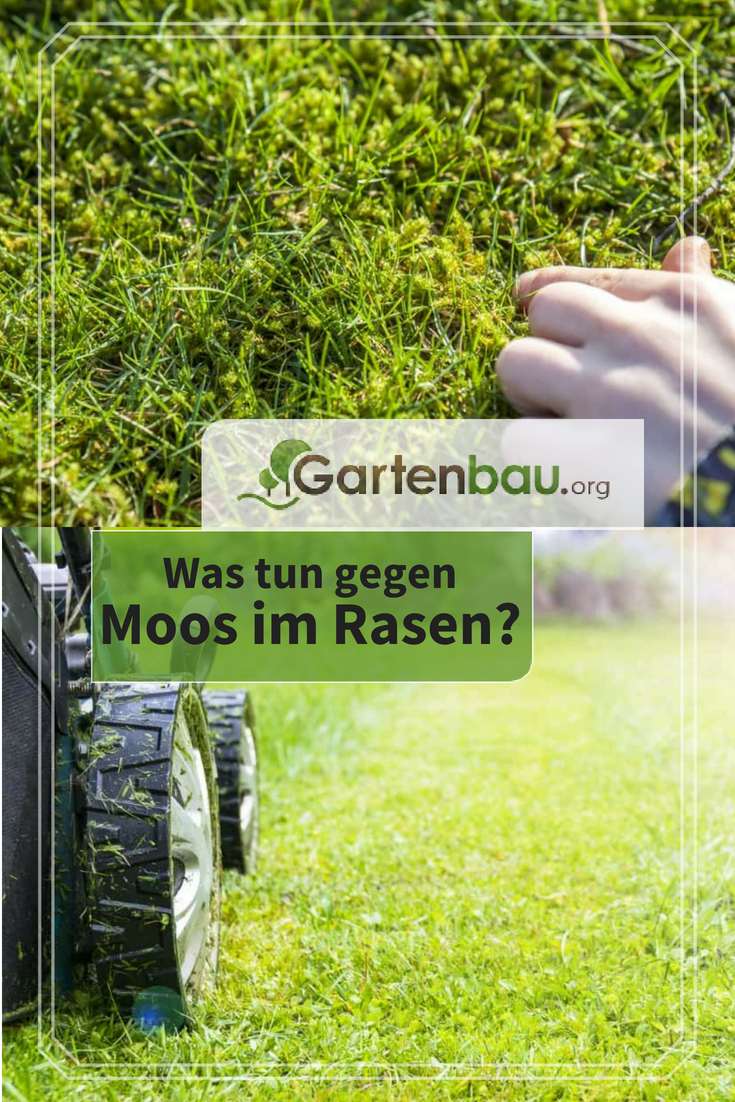 Moos Im Rasen Effizient Entfernen Ursachen Moglichkeiten Tipps