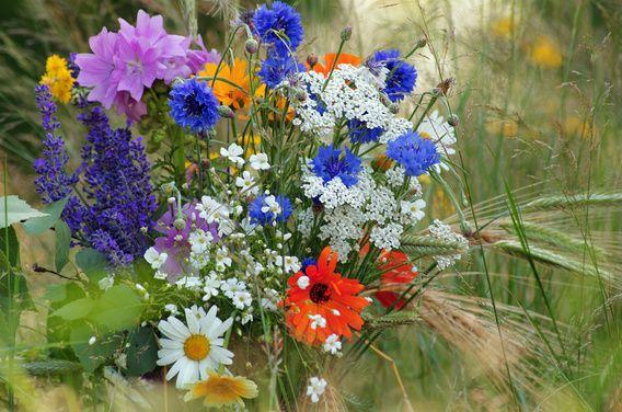 Koop 'Wilde bloemen in een zomer weide' van Tanja Riedel voor aan de muur.