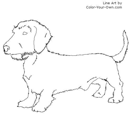 Wirehaired Dachshund Line Art With Images Dog Coloring Page