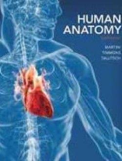Human anatomy 8th edition free ebook online anatomy books human anatomy 8th edition free ebook online fandeluxe Gallery