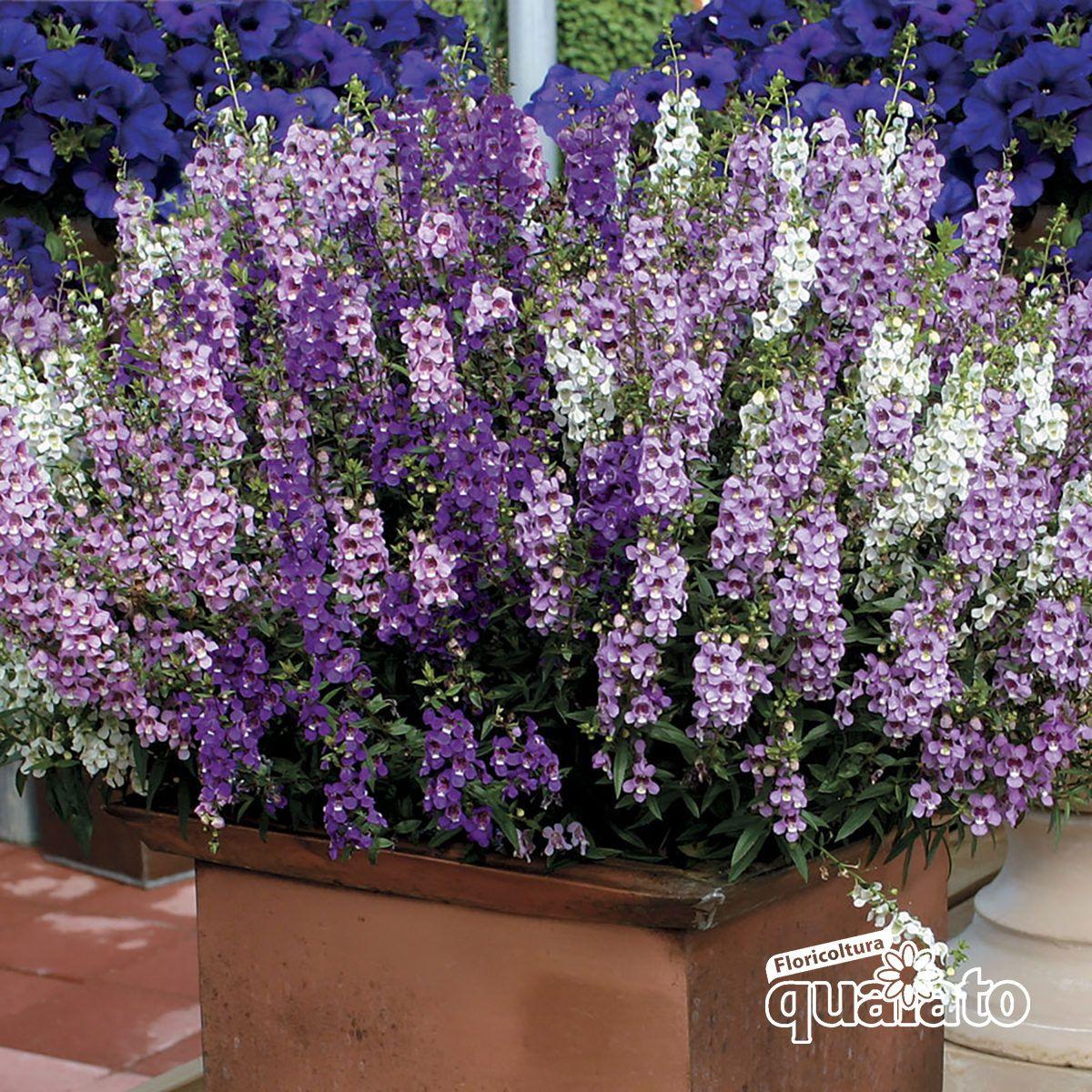 Fiori Da Vaso Perenni piante perenni fiorite | piante perenni, giardini perenni