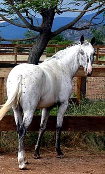 images about Animals and birds on Pinterest   Horses  Search and Animals Pinterest
