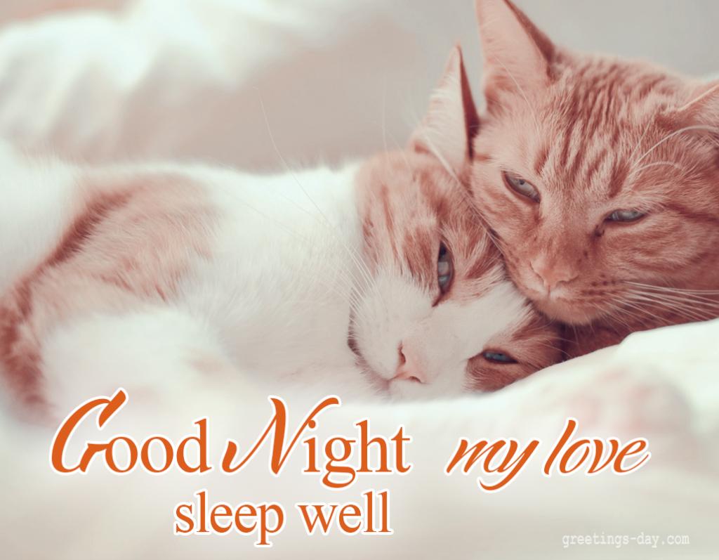 Good Night My Love Good Night Messages Good Night I Love You Good Night Greetings