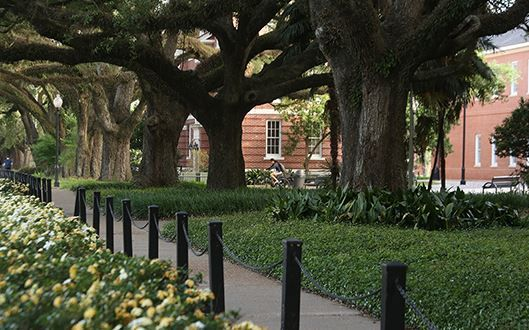 tree campus usa siu - 600×401