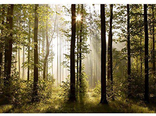 Fototapete Wald Bäume 352 x 250 cm Vlies Wand Tapete Wohnzimmer