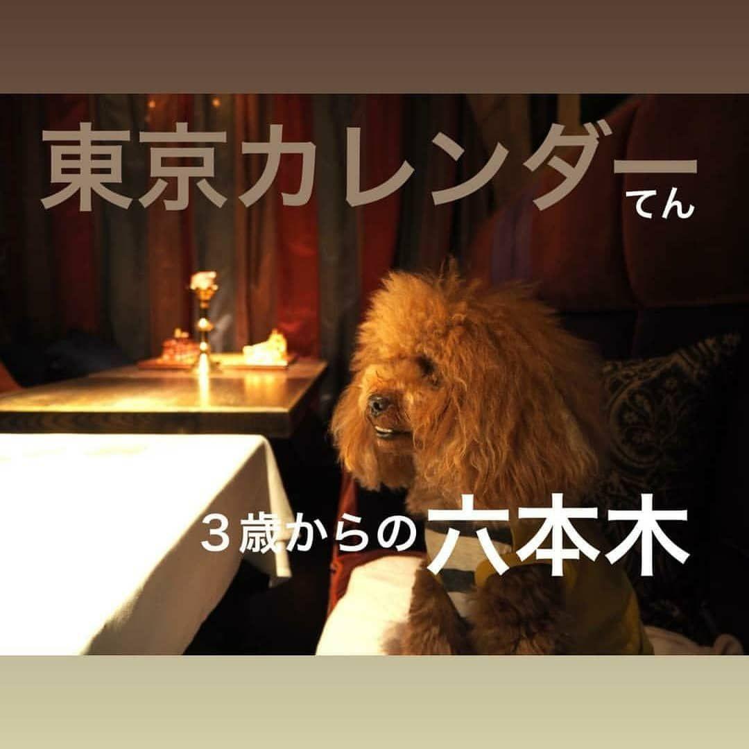 東京カレンダーごっこてん版 港区おじさん wineloungebanque トイプードルtoypoodle